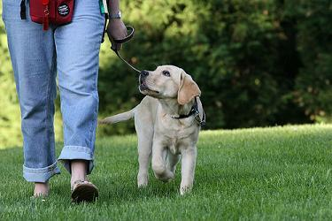 How to Prevent Leash Pulling with Your Dog